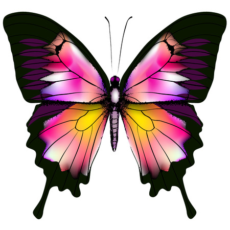 Butterfly Illustration Stock Vector - 26090781