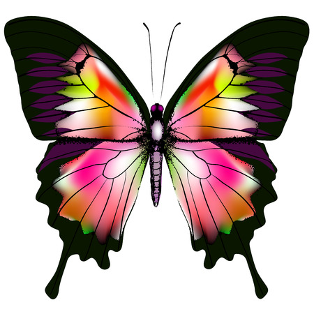 Isolated Butterfly Illustration Stock Vector - 26581857
