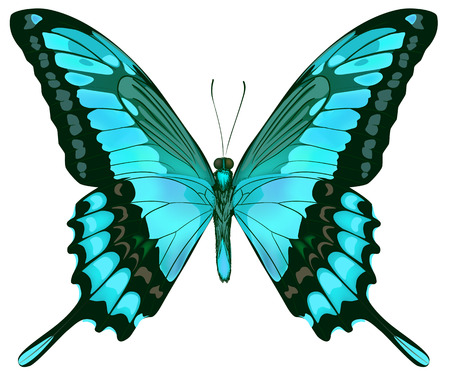 butterfly isolated: Beautiful vector isolated green blue butterfly Illustration