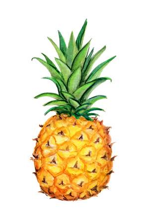 dominant color: Pineapple.  Isolated on a white background. Watercolor handwork illustration of tropical fruit. Hand drawn painting with orange yellow green white dominant color