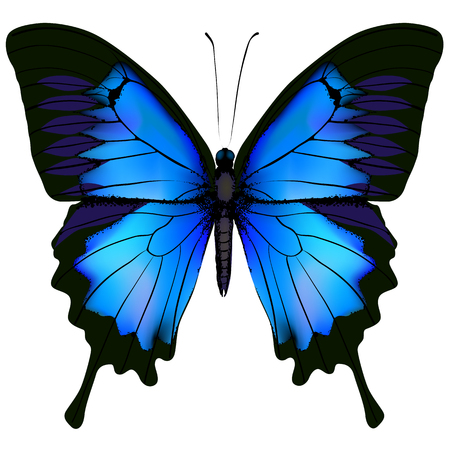 Papilio azul borboleta Ulisses. Rabo de andorinha da montanha isolado no fundo branco Foto de archivo - 56643373