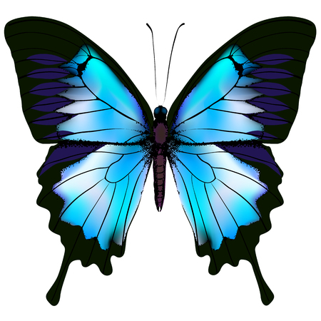butterfly isolated: Butterfly illustration. Beautiful azure isolated butterfly