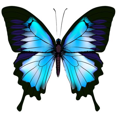 Papillon illustration. Beau papillon isolé azur
