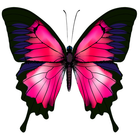 amaranthine: Butterfly. illustration of red butterfly isolated on white background Illustration
