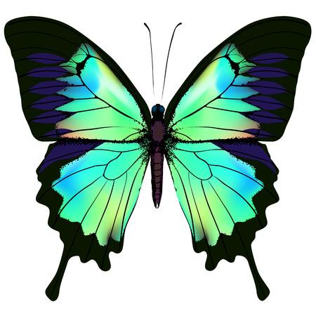 Vlinder. illustratie van blauwe azuur en groene kleurrijke vlinder. vlinder op een witte achtergrond Stock Illustratie