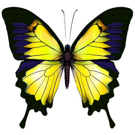 Butterfly. Yellow butterfly isolated illustration on white background. Nonexistent butterfly zoology specimen