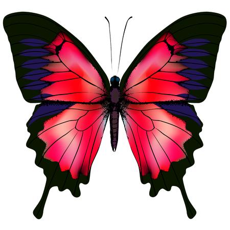 Schmetterling Illustration der schönen roten Schmetterling isoliert auf weißem Hintergrund