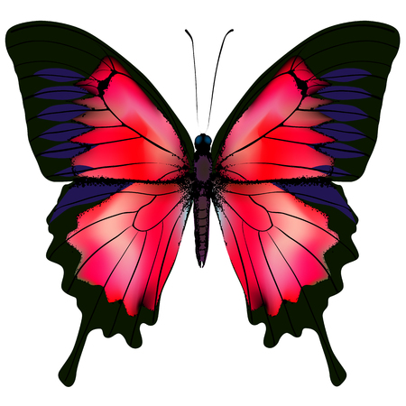 Butterfly illustration of beautiful red butterfly isolated on white background Illustration