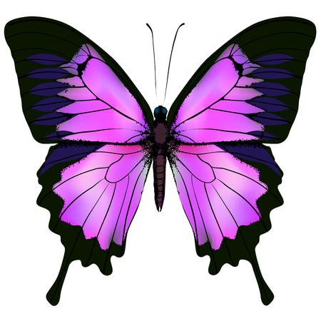 Vlinder afbeelding van de mooie roze en paarse vlinder op een witte achtergrond
