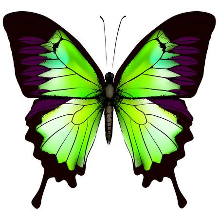 蝶。美しい緑の蝶白い背景で隔離のベクトル イラスト