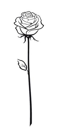 Rose. White Pink rose flower outline sketch. Isolated rose sign on white background, vector illustration
