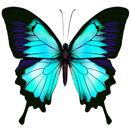 Butterfly. Vector illustration of blue azure white colorful butterfly. Beautiful butterfly isolated on white background