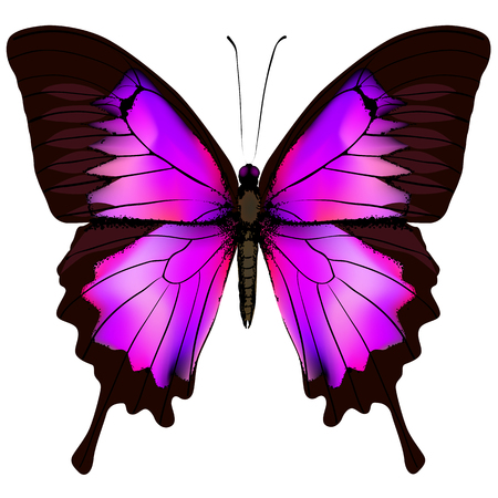 Vlinder. Vectorillustratie van mooie roze en purpere vlinder die op witte achtergrond wordt geïsoleerd Stock Illustratie