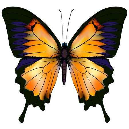 Butterfly. Orange and yellow butterfly isolated illustration on white background. Nonexistent butterfly zoology specimen Illustration