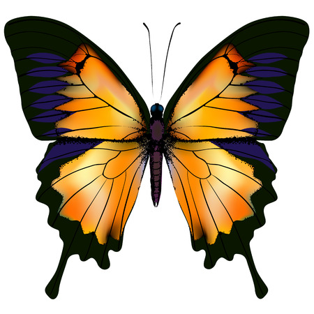 Butterfly. Orange and yellow butterfly isolated illustration on white background. Nonexistent butterfly zoology specimen Stock Photo