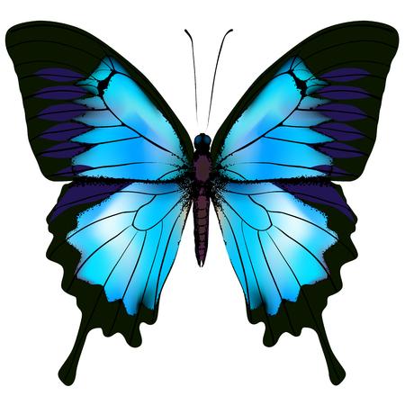Butterfly vector illustration Illustration