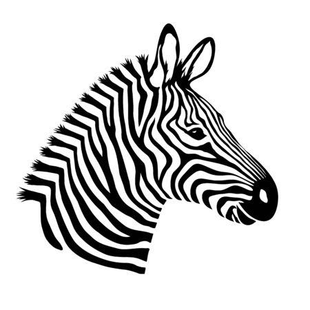 Zebra head. Wild animal logo