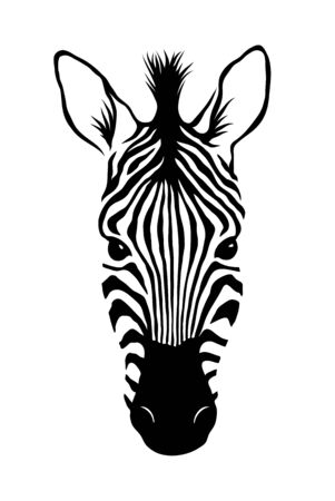 Zebra head, Animal face isolated on white background vector Illustration. Graphic Design for logo. wildlife and fauna zoo
