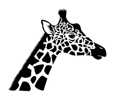 Giraffe head. Wild animal logo artwork design. Black and white vector illustration