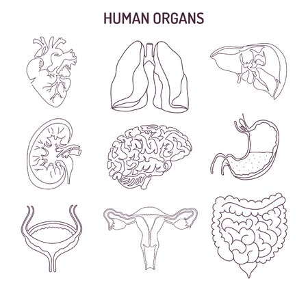 Human internal organs collection. Vector sketch medical symbols isolated on white illustration. Hand drawn line art icons set.