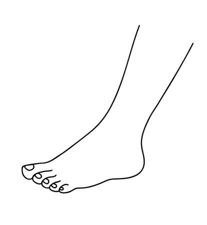 Human foot. Beautiful baby foot . Health, body care and beauty concept. Line art vector illustration.