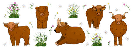 Set of hand drawn small and big highland brown cows, which are sitting, standing, lying on the ground with flowers, meadow clover, buttercup, daffodils Vektorgrafik