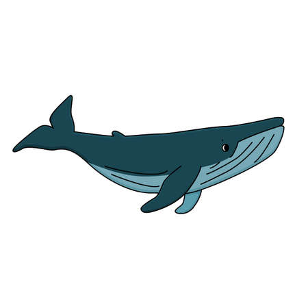 Vector Cartoon outline cute blue whale. Graphic, poster design, t-shirt design, invitations, books, greeting cards, post. Animal is isolated on white background.