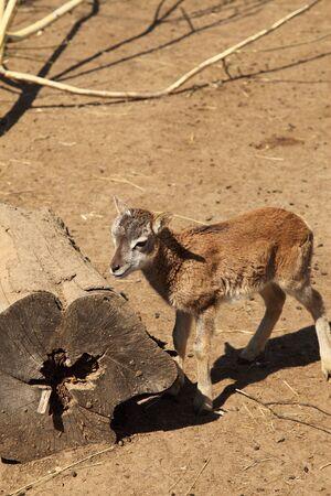 The small Llama Stock Photo