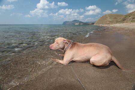 dog1 Stock Photo