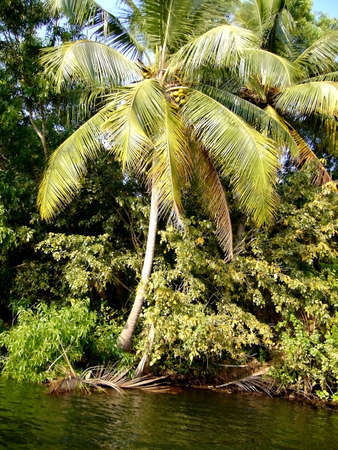 exotic vegetation on the banks of the River Stock Photo