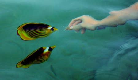 exotic fish: pesci esotici in mare