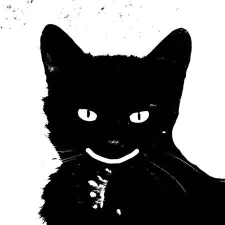 smiling black cat Stock Photo
