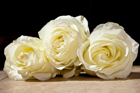 gentle light background with roses Stock Photo