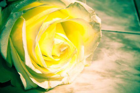 retro background with roses Stock Photo