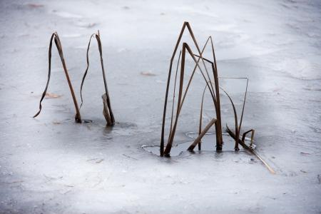 the ice plant Stock Photo