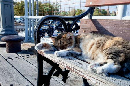 Cat sleeping on a bench