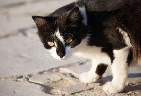 cats looks