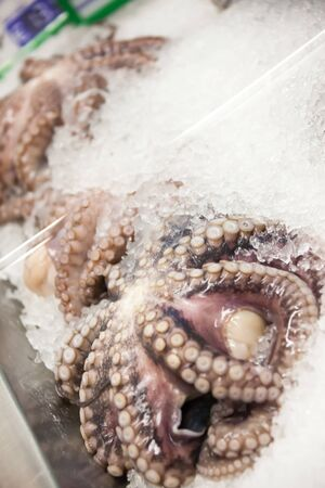octopus on the ice in a restaurant Stock Photo