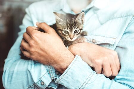 Cozy kitten caught in arms of a man and shot through the window behind glass. Small cat. Animals.