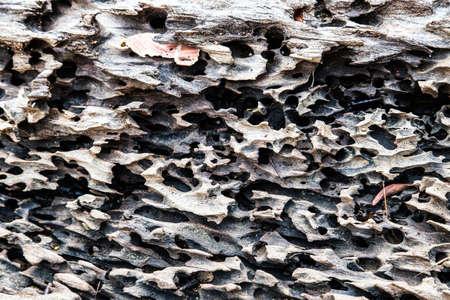 Bark of a tree is eaten by bark beetles