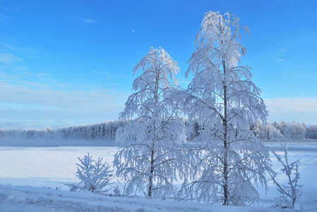 Beautiful trees in rime on the bank of the river Vuoksi in Finland photo