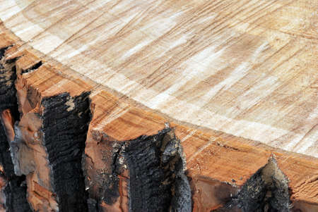 sawn: Texture of sawn wood with beautiful patterns