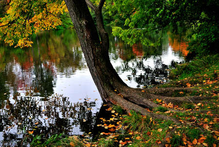 A quaint tree near the water in the beautiful autumnal park Stock fotó