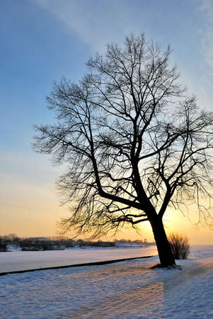 Beautiful tree against magic golden winter sunset photo