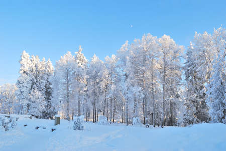 Winter park in Finland with beautiful trees covered with frost photo