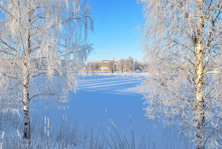 birch trees: Mikkeli, Finland. Very beautiful birch trees in rime on the bank of the frozen harbor