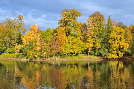 st  petersburg: Beautiful autumn trees on the lake in St. Petersburg