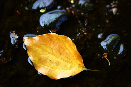 yellow dry leaf on the water, foreground photo