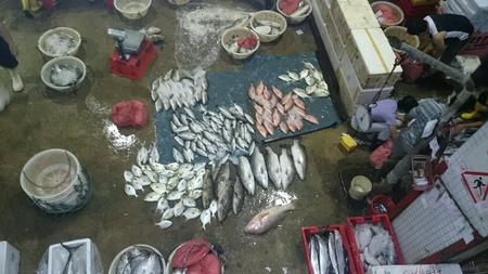 fish: Fishery Port in Singapore