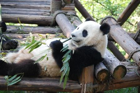 성도 팬더 예약 팬더